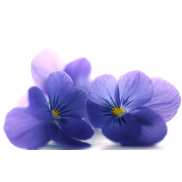 Eetbaar viooltje